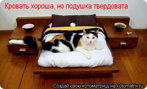 Котоматрица: Кровать хороша, но подушка твердовата