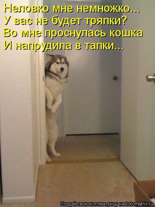 Котоматриця!)))) - Страница 10 1129754