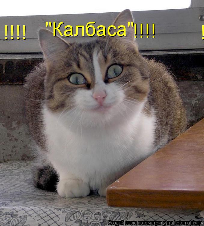 """Котоматрица: """"Калбаса"""" !!!!                                !!!! !!!!                                !!"""