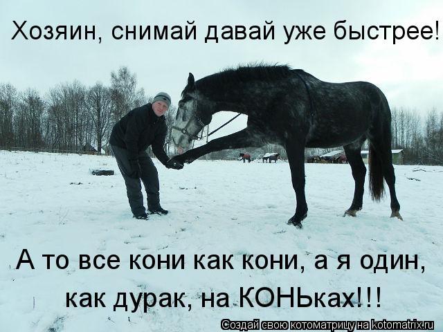 Котоматрица: Хозяин, снимай давай уже быстрее! А то все кони как кони, а я один, как дурак, на КОНЬках!!!