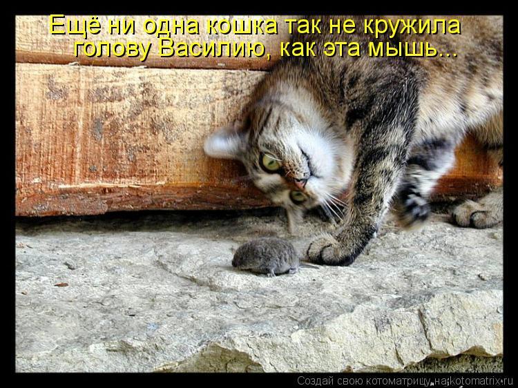 Котоматрица: Ещё ни одна кошка так не кружила голову Василию, как эта мышь...