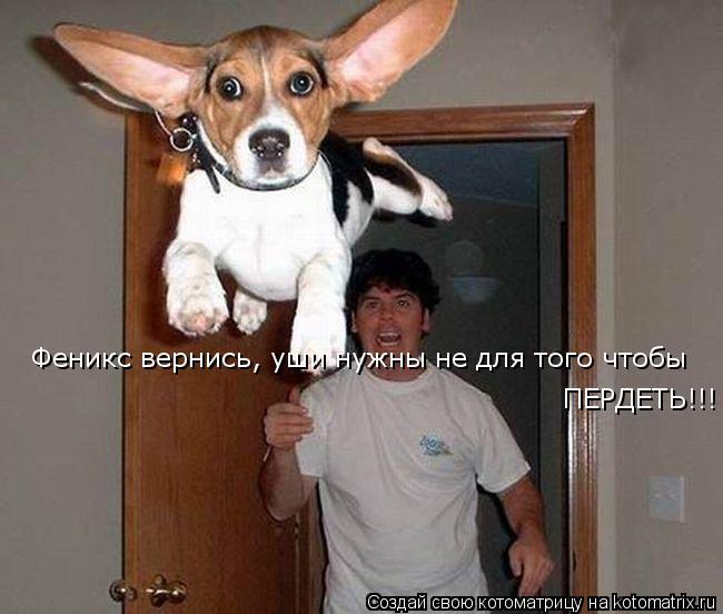 Котоматрица: Феникс вернись, уши нужны не для того чтобы ПЕРДЕТЬ!!!