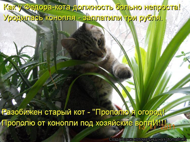 """Котоматрица: Как у Федора-кота должность больно непроста! Уродилась конопля - заплатили три рубля. Разобижен старый кот - """"Прополю я огород! Прополю от ко"""