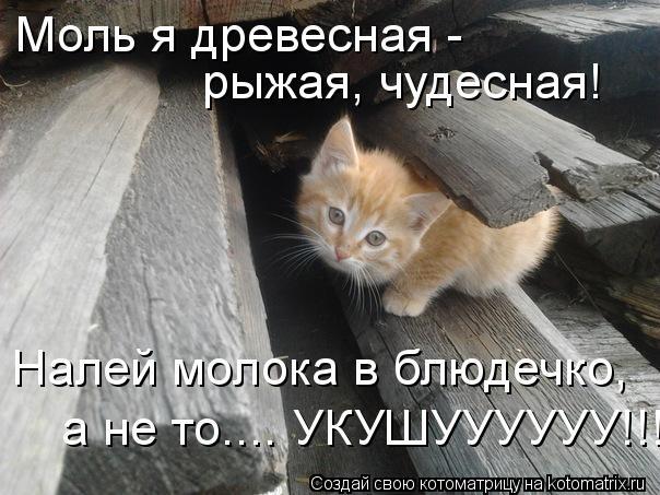 Котоматрица: Моль я древесная -  рыжая, чудесная! Налей молока в блюдечко, а не то.... УКУШУУУУУУ!!!