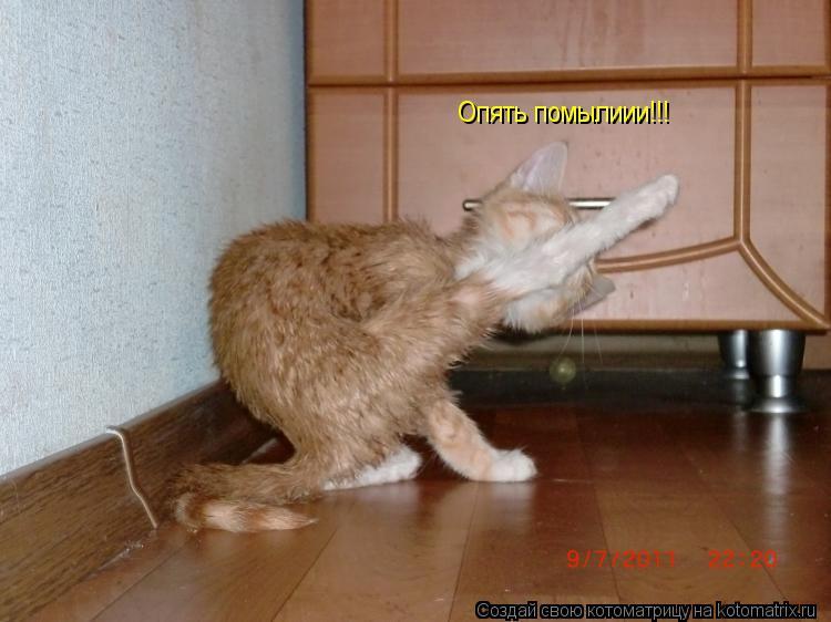 Котоматрица: Опять помылиии!!!