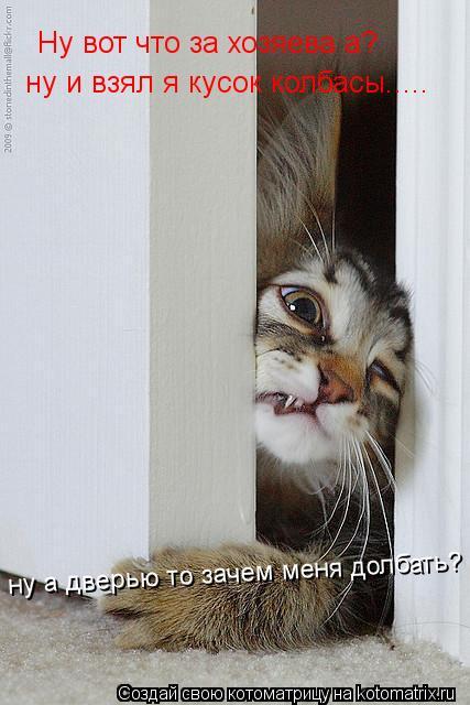Котоматрица: Ну вот что за хозяева а? ну и взял я кусок колбасы..... ну а дверью то зачем меня долбать?