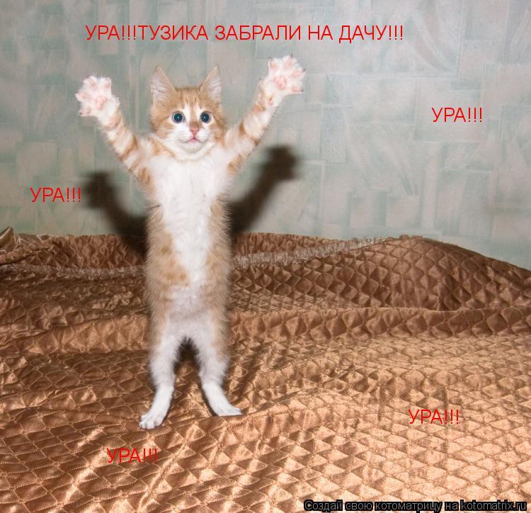 Котоматрица: УРА!!!ТУЗИКА ЗАБРАЛИ НА ДАЧУ!!! УРА!!! УРА!!! УРА!!! УРА!!!