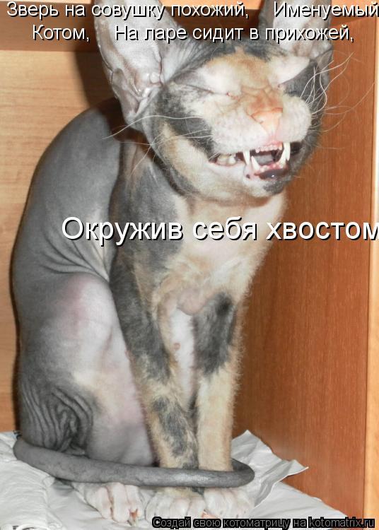 Котоматрица: Зверь на совушку похожий,    Именуемый  Котом,    На ларе сидит в прихожей,     Окружив себя хвостом.