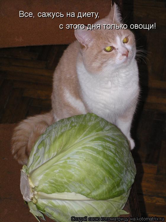 Котоматрица: Все, сажусь на диету,  с этого дня только овощи!