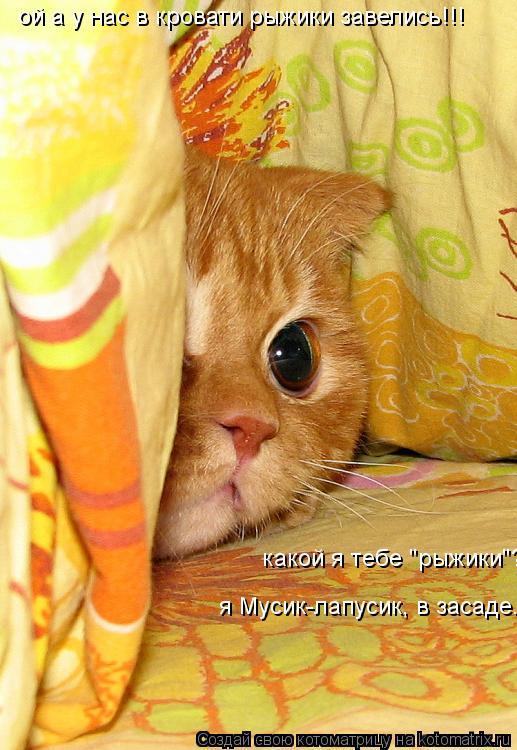 """Котоматрица: ой а у нас в кровати рыжики завелись!!! какой я тебе """"рыжики""""? я Мусик-лапусик, в засаде."""