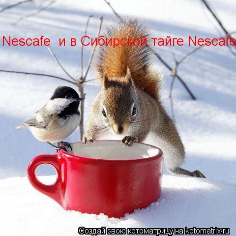 Котоматрица: Nescafe  и в Сибирской тайге Nescafe