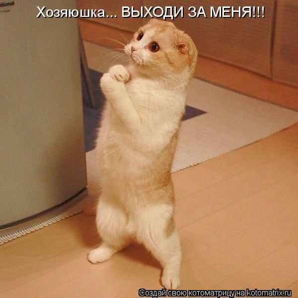 Котоматрица: Хозяюшка... ВЫХОДИ ЗА МЕНЯ!!!