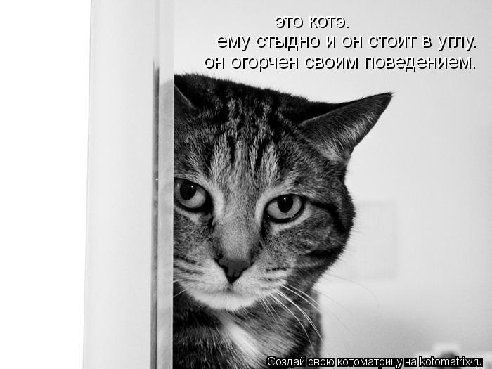 Котоматрица: это котэ. ему стыдно и он стоит в углу. он огорчен своим поведением.