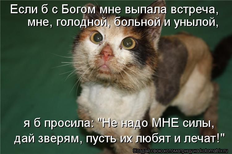 """Котоматрица: Если б с Богом мне выпала встреча,  мне, голодной, больной и унылой,  я б просила: """"Не надо МНЕ силы,  дай зверям, пусть их любят и лечат!"""""""