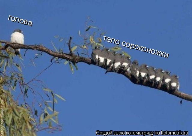 Котоматрица: тело сороконожки голова