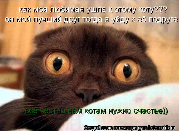 Котоматрица: как моя любимая ушла к этому коту??? он мой лучший друг тогда я уйду к её подруге всё честно нам котам нужно счастье))