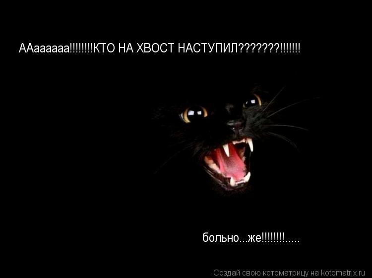 Котоматрица: ААаааааа!!!!!!!!КТО НА ХВОСТ НАСТУПИЛ???????!!!!!!! больно...же!!!!!!!!.....