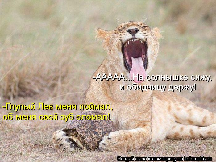 Котоматрица: -ААААА...На солнышке сижу, и обидчицу держу! -Глупый Лев меня поймал, об меня свой зуб сломал!