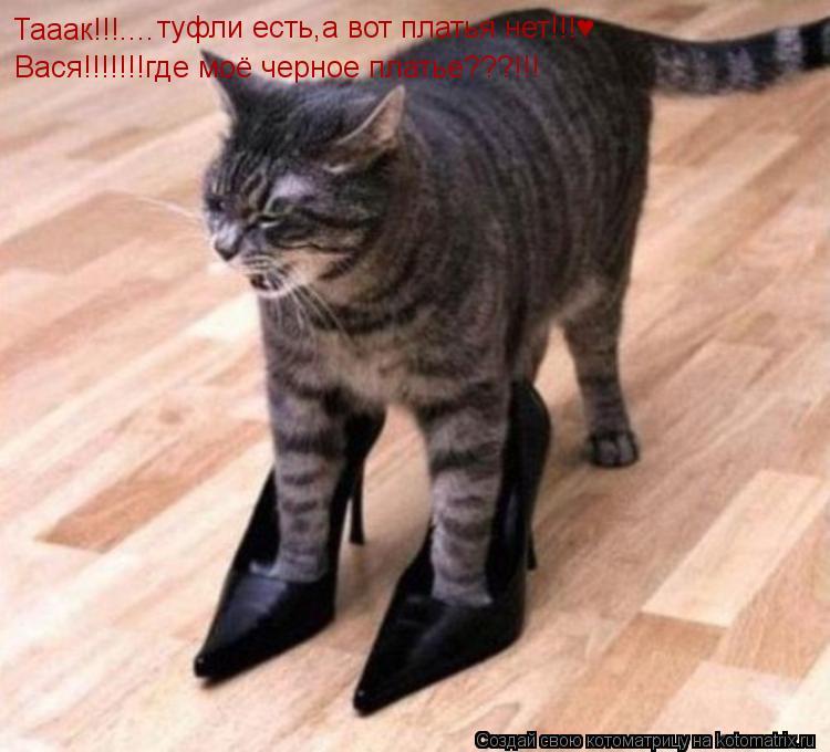 Котоматрица: Тааак!!!.... туфли есть,а вот платья нет!!!♥ Вася!!!!!!!где моё черное платье???!!!