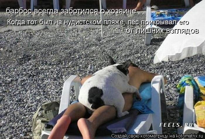 Котоматрица: барбос всегда заботился о хозяине Когда тот был на нудистском пляже, пёс прикрывал его от лишних взглядов