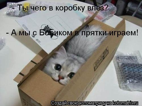Котоматрица: - Ты чего в коробку влез?  - А мы с Бобиком в прятки играем!