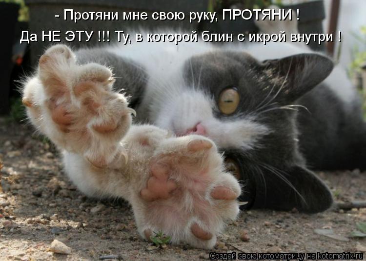 Котоматрица - - Протяни мне свою руку, ПРОТЯНИ ! Да НЕ ЭТУ !!! Ту, в которой блин с