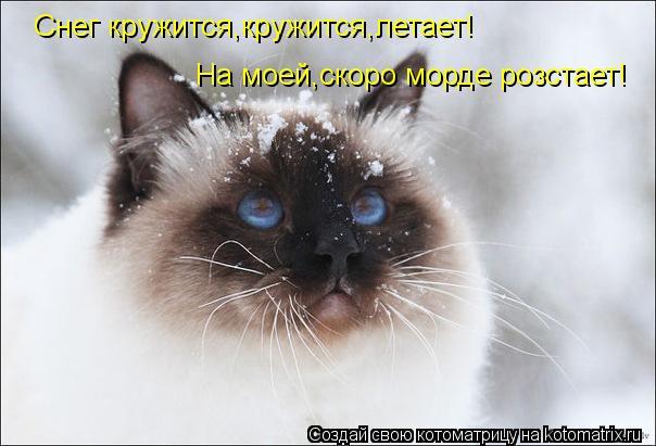Котоматрица: Снег кружится,кружится,летает! На моей,скоро морде розстает!