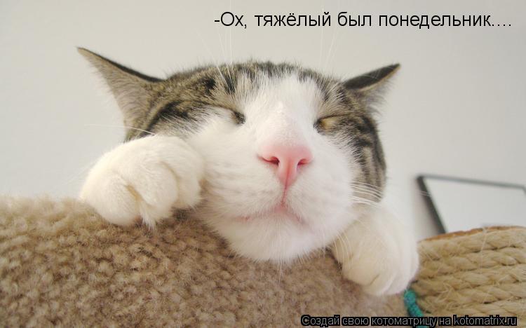 Котоматрица: -Ох, тяжёлый был понедельник....