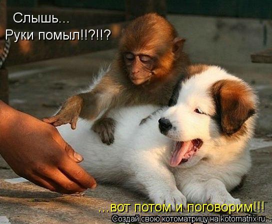 Котоматрица: Слышь... Руки помыл!!?!!? ...вот потом и поговорим!!!