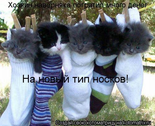 Котоматрица: Хозяин наверняка потратил много денег На новый тип носков!