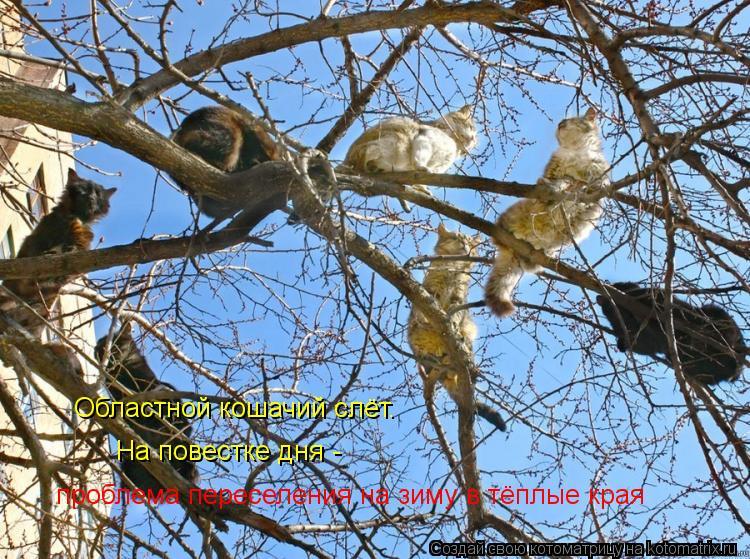 Котоматрица: На повестке дня -  проблема переселения на зиму в тёплые края Областной кошачий слёт.