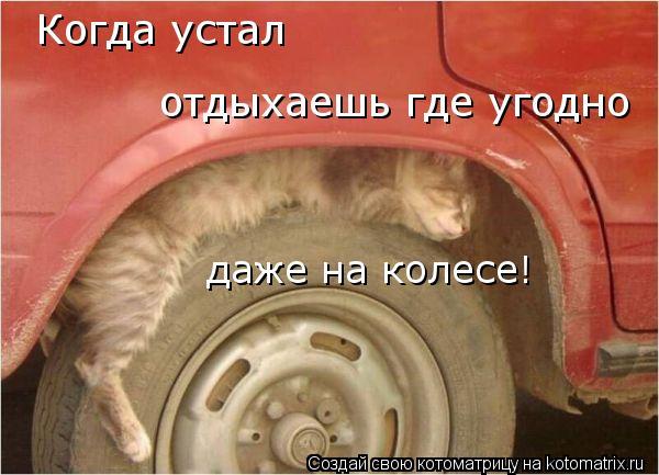 Котоматрица: Когда устал отдыхаешь где угодно даже на колесе!