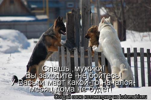 Котоматрица: Слышь ,мужики! Вы заходите -не бойтесь! У Васьки март какой-то начался- месяц дома не будет!