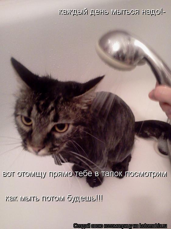 Котоматрица: каждый день мыться надо!- как мыть потом будешь!!! вот отомщу прямо тебе в тапок посмотрим