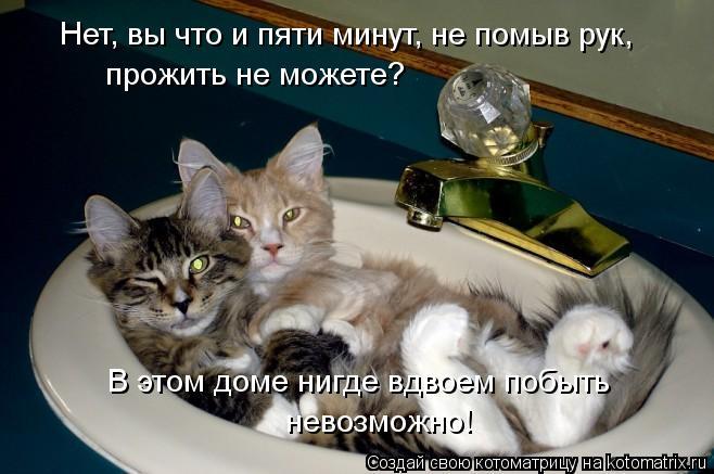 Котоматрица - Нет, вы что и пяти минут, не помыв рук,  прожить не можете? В этом дом