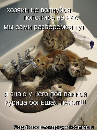Котоматрица: хозяин не волнуйся положись на нас мы сами разберёмся тут я знаю у него под ванной курица большая лежит!!!