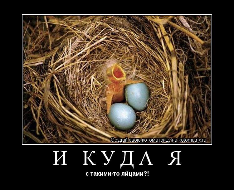 Котоматрица: И куда я с такими-то яйцами?!