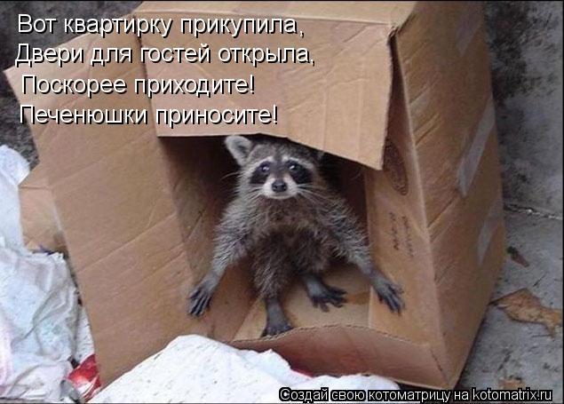 Котоматрица: Вот квартирку прикупила Двери для гостей открыла, Поскорее приходите! Печенюшки приносите! ,