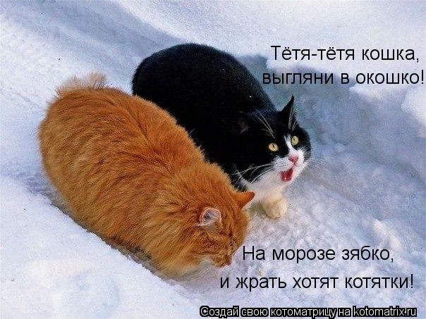 Котоматрица: Тётя-тётя кошка, выгляни в окошко! На морозе зябко, и жрать хотят котятки!