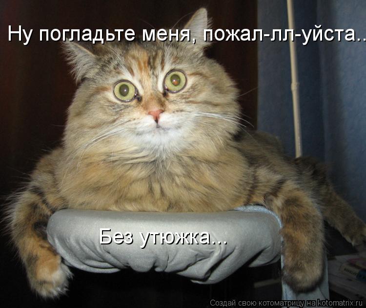 Котоматрица: Ну погладьте меня, пожал-лл-уйста... Без утюжка...