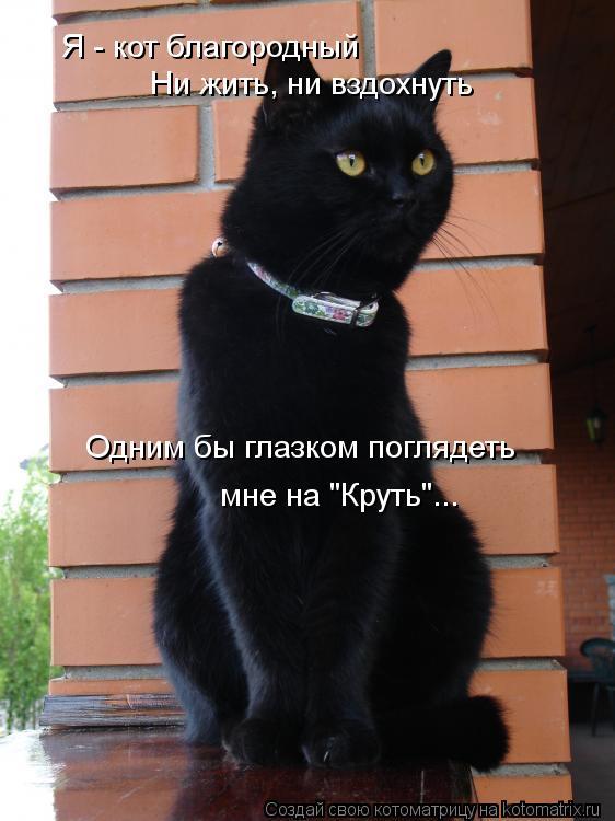 """Котоматрица: Я - кот благородный Ни жить, ни вздохнуть Одним бы глазком поглядеть   мне на """"Круть""""..."""