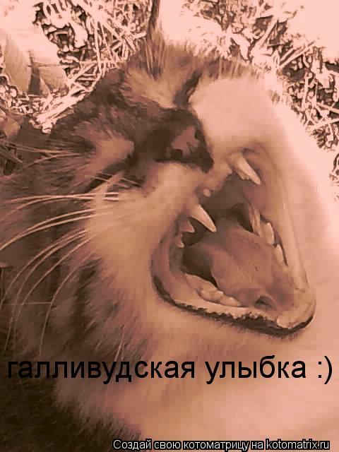 Котоматрица: галливудская улыбка :)