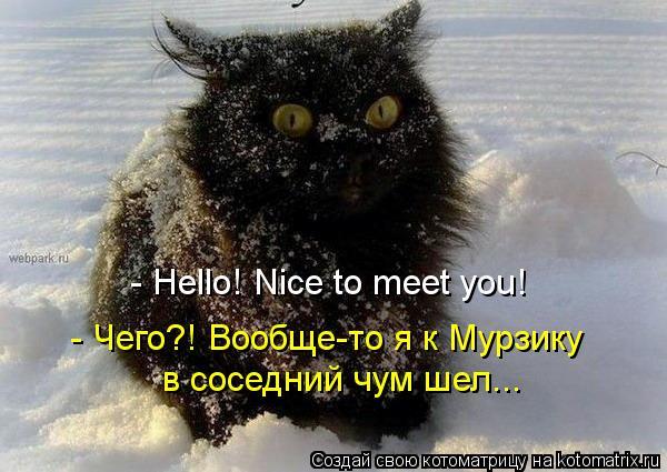 Котоматрица: - Hello! Nice to meet you! - Чего?! Вообще-то я к Мурзику  в соседний чум шел...