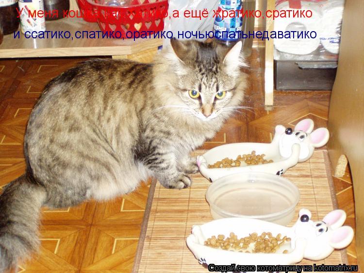 Котоматрица: У меня кошка как Хатико,а ещё жратико,сратико и ссатико,спатико,оратико,ночьюспатьнедаватико