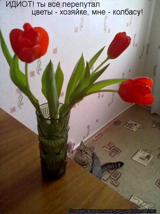 Котоматрица: ИДИОТ! ты всё перепутал цветы - хозяйке, мне - колбасу!