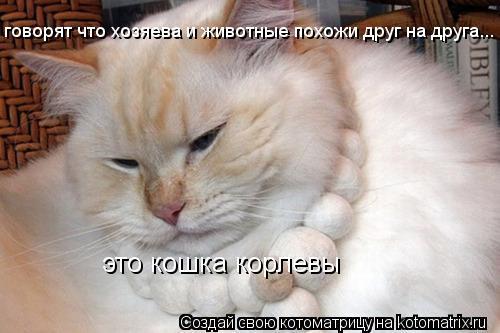 Котоматрица: это кошка корлевы говорят что хозяева и животные похожи друг на друга...