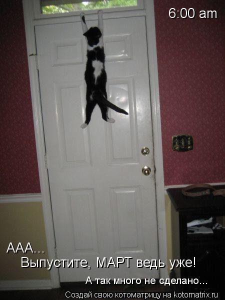 Котоматрица: 6:00 am AAA... Выпустите, МАРТ ведь уже! А так много не сделано...