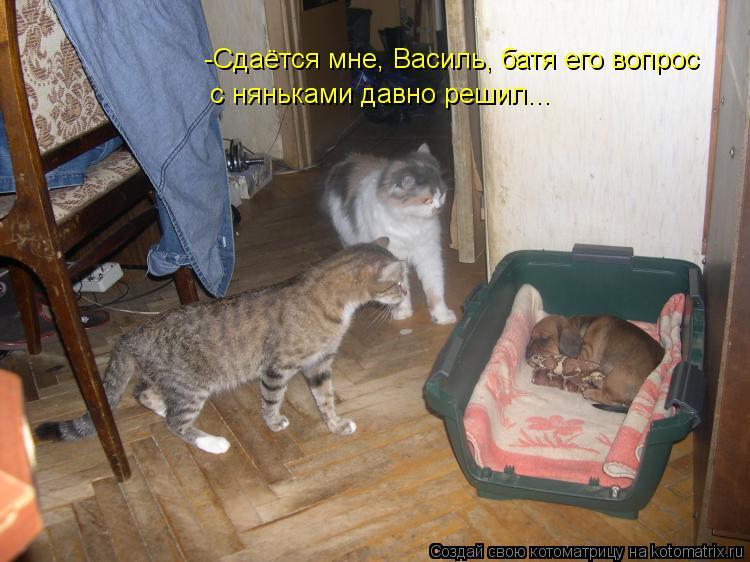 Котоматрица: -Cдаётся мне, Василь, батя его вопрос с няньками давно решил...