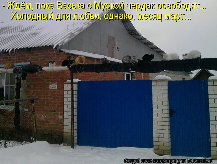 Котоматрица: - Ждём, пока Васька с Муркой чердак освободят... Холодный для любви, однако, месяц март...