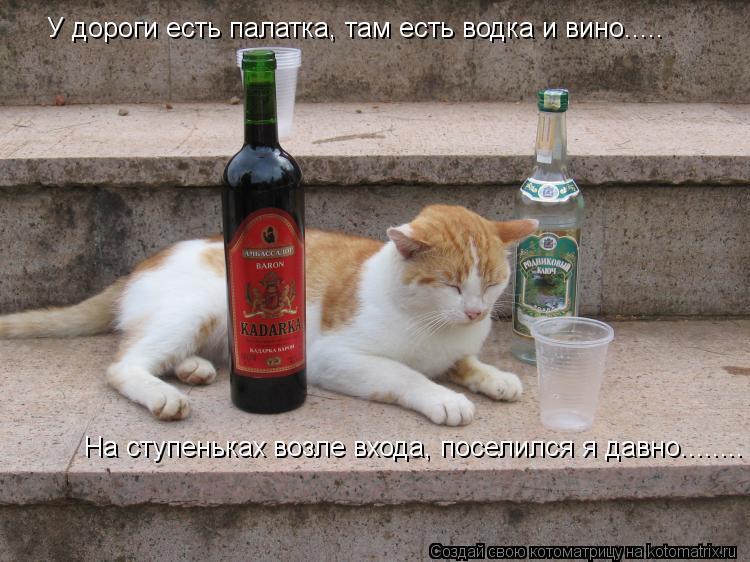 Котоматрица: У дороги есть палатка, там есть водка и вино..... На ступеньках возле входа, поселился я давно........